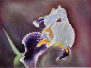 DSC_0022 Pastel Iris violet rc